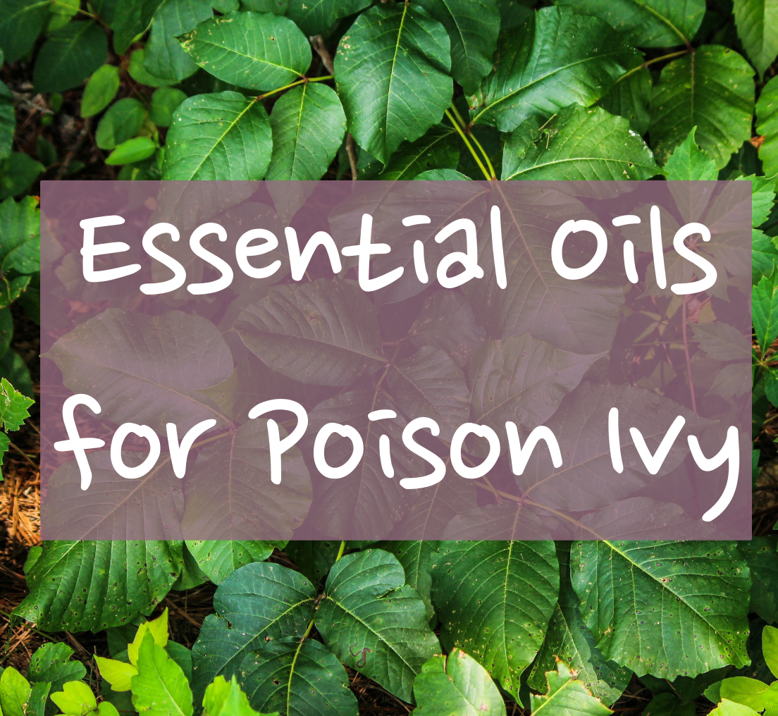 Essential Oils for Poison Ivy   The Dreaming Earth
