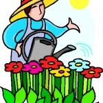 Neem Oil Garden Pests
