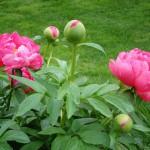 garden-14165_640