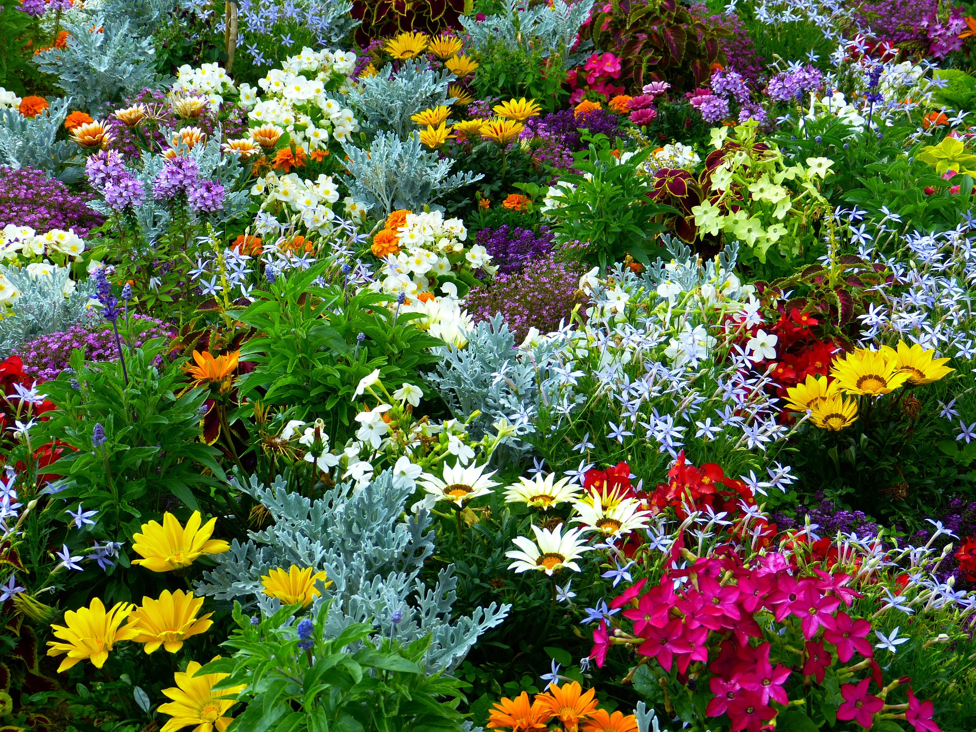 Plant your own aromatherapy garden the dreaming earth botanicals blog - Aromatic herbs pots multiple benefits ...