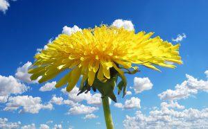 flower-1344317_640