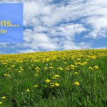 the importance of dandelions