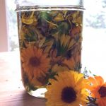calendula and oil in jar