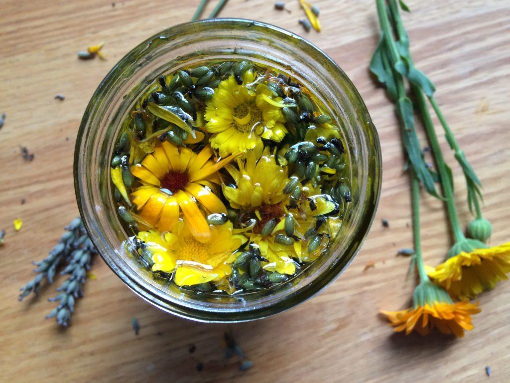 calendula in jar of oil